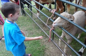 JT trying to feed the sheep...he ended up giving the piece of food to me.