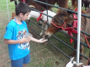 Connor feeding the miniature horse