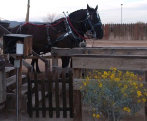 Here are the horses that pulled the stagecoach. According to the website, the stagecoach is now pulled by mules.